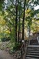 Torun ogrod zoobotaniczny milorzeby dwuklapowe 01.jpg