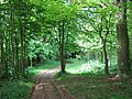 Trackway to Sweets Wood - geograph.org.uk - 1291024.jpg