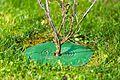 TreeGuard GR250.jpg