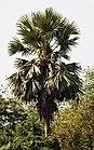 Tree I IMG 1497.jpg