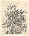 Tree Trunks and Lane MET DP829226.jpg