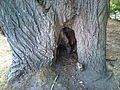 Tree entrance further.jpg