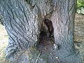 Tree entrance further.jpg