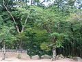 Trees at Girimsa-Gyeongju-Korea-01.jpg