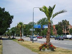 Palmen in Hafennähe