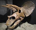 Dinosaure wikip dia for Fenetre mandibulaire