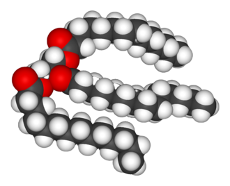 Fat - A fat, or triglyceride, molecule. Note the three fatty acid chains attached to the central glycerol portion of the molecule.