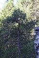 Truthstein 52558 2014-04-08.JPG