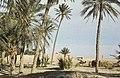 Tunis1960-041 hg.jpg