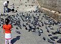 Turkey - Istanbul (16578564578).jpg