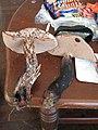 Tylopilus alboater (Schwein.) Murrill 29047.jpg