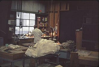 University of Oregon Museum of Natural and Cultural History - A laboratory in the museum in 1966