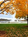 Under the tree of fall foliage in state park (15682166456).jpg