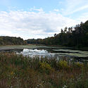 Thumbnail image of Upper Deckers Creek WMA
