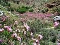 Vallée des morts - Crète 2.JPG