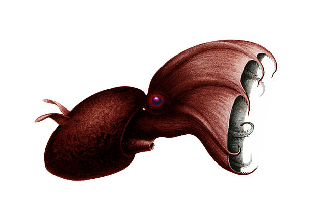 Vampire Squid Facts For Kids