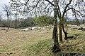 Vangfeltet, Vang Burial Site, Norway's largest burial field, iron-Viking age (gravfelt fra jernalderen), Oppdal, Trøndelag. Birk, spring, etc. 2019-04-25 464.jpg