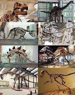 Various dinosaurs002.jpg