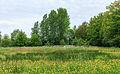 Verruigde plek in bloemenweide. Locatie, Natuurterrein De Famberhorst.jpg
