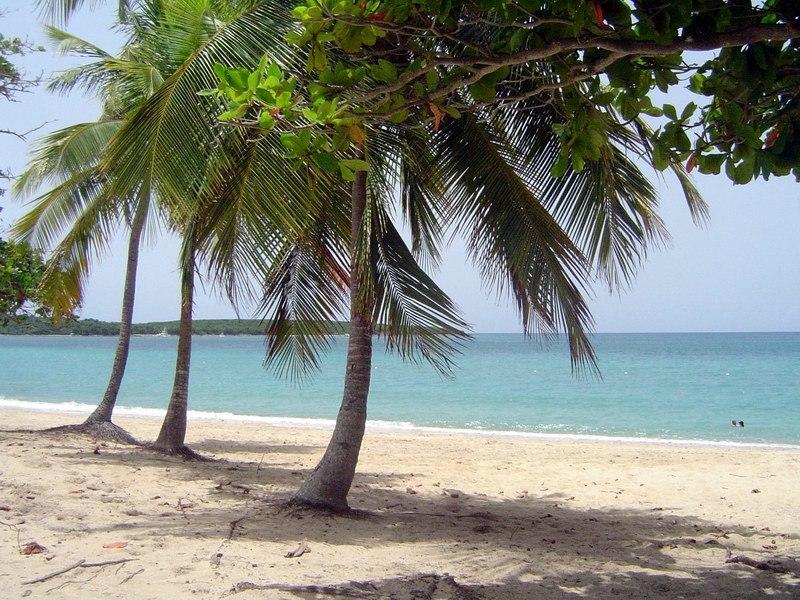 Vieques SunBayBeach