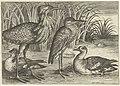 Vier waadvogels langs een oever.jpeg