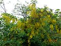 View of yellow flower from kasmir.jpg