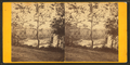 View on the Wissahickon, from Robert N. Dennis collection of stereoscopic views.png