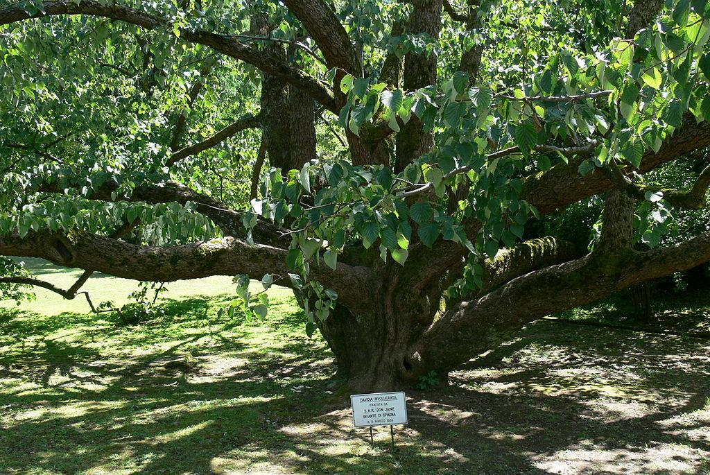 1000 images about arbustes et arbres feuilles en forme. Black Bedroom Furniture Sets. Home Design Ideas