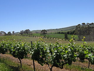 Clare Valley Region in South Australia