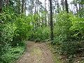 WILCZE ŁUGI wiosna 26 - panoramio.jpg