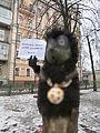 WMUA freepanorama campaign Kyiv 06.jpg