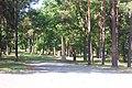 Waldland - Sachsenhausen - geo.hlipp.de - 1788.jpg
