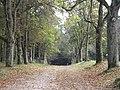 Waldweg bei Alt Placht - geo.hlipp.de - 28697.jpg