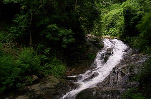 Geography of Kerala - A small mountain stream in the Nelliampathi mountains