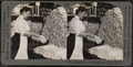Weighing and sorting raw silk skeins. Silk industry (reeled silk), South Manchester, Conn., U.S.A, by Keystone View Company 2.png