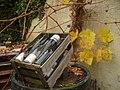 Wein aus deutschen Laenden - geo.hlipp.de - 14983.jpg