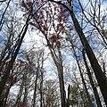White Oak (31264309815).jpg