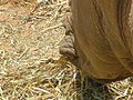 White Rhino 04.jpg