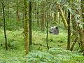 Whw-drymen-balmaha-wildlife-camera.jpg