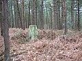 Wigpool Common - geograph.org.uk - 12732.jpg