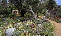 Wildflowers, Boyce Thompson Arboretum.jpg