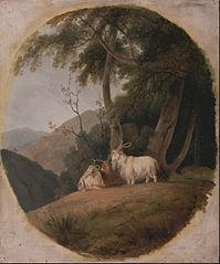 Kashmir Goat