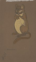 Dormouse (costume design for Alice-in-Wonderland, 1915)