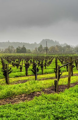 Wine Country on a rainy day