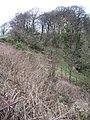 Wooded Glen - geograph.org.uk - 339958.jpg