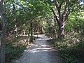 Woodland Nature Trail, Point Pelee National Park, Leamington, Ontario, Canada (21773595125).jpg