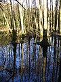 Woodland Pond by Stedlands Farm - geograph.org.uk - 303057.jpg