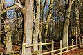 Woodland near Ballymena - geograph.org.uk - 647785.jpg