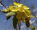 Yellow (9848624485).jpg