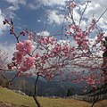 Yongding, Longyan, Fujian, China - panoramio (3).jpg